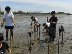 10.12.2015-AngloSingapore-BangPu-100 trees (22) (pattfoundation2014) Tags: thailand education mangrove treeplanting bangpu pattfoundation anglosingapore