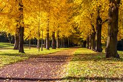 Stadtpark Magdeburg (SaschaHaaseFotografie) Tags: nature herbst natur magdeburg stadtpark rotehornpark authem