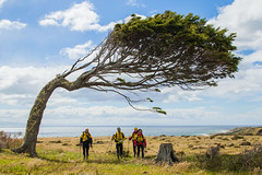 amazing windblown tree - Justin Lotak
