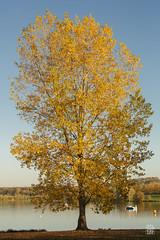 2015-11-01_Q8B3950  Sylvain Collet.jpg (sylvain.collet) Tags: autumn france nature automne sur marne vairessurmarne vaires