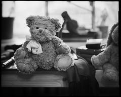 Harry Bukowski (photo3454) Tags: bear film james teddy 200 bj analogue press burke foma t200 tomaskapocius