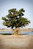 Djenne (ClikSnap) Tags: djenne mali sahara