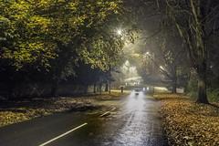 The journey home, late (Briggate.com) Tags: autumn trees mist fog night leeds mists nocturen lloyd6344