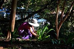 DSC_0039 (RUMTIME) Tags: lady yard garden donkey queensland coochie coochiemudlo