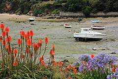 Fleurs de Bretagne (philippe.ducloux) Tags: flowers france flower fleur fleurs canon boat brittany bretagne bateau finistre le batz agapanthe ledebatz 450d canon450d strictlygeotagged