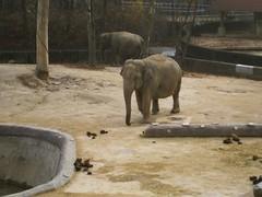 Elephants (brianapluskyle) Tags: zoo korea elephants seoulzoo