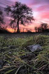 Dawn (JohnB's photos) Tags: field grass sunrise dawn nikon zerene focusstacked backlittrees nikon2470mm indurotripod induroct214 nikond610