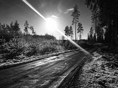 Road in the Forest  ( tesswiberg.wordpress.com ) (Tessaan) Tags: road forest