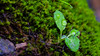 Drips and Drops (BigOlFuzzyFella) Tags: moss rain droplets water 16x9 macro