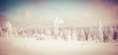 White Black Forest (pure:passion:photography) Tags: blackforrest blackforest forest forrest landscape snow white colors pastels nature natur landschaft panorama schnee schneebedeckt schwarzwald badenwürttemberg deutschland germany europe wald himmel sonya99 sonyalpha99