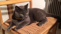 Cutest Little Cat (purkil) Tags: cat kat kitty greycat graycat yelloweyes cute