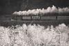 Treno Storico Valsesia (beppeverge) Tags: beppeverge binari borgosesia carriage ferroviastorica gr640 historic loco locomotiva locomotive rails railwaystation rotaie stazioneferroviaria steamtrain train trenoavapore valsesia wagon