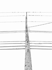 Wires #3 (O Caritas) Tags: utilitypole utilitywires lookingup sky bw blackandwhite monochrome eastlansing lansing michigan copyright2017bypatricktpowerallrightsreserved 2017 january snapseed samsunggalaxysiii 2january2017 telephonepole telephonewires 20170102141634 birds