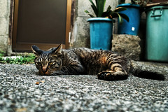 neko-neko1635 (kuro-gin) Tags: cat cats animal japan snap street straycat 猫 sigma dp2