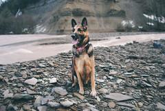 Zoar Valley, Jan 2017 (àlalune) Tags: german shepherd dog zoar valley hike