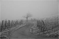 Sony *337 (KKS_51) Tags: sonyalpha7ii elsass winter weinberge