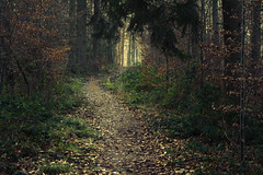 Eifel Trails (Netsrak (on/off)) Tags: tree trees baum bäume wald forst forest woods path way trail pfad weg neujahr newyearsday