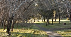 _MOR6429.jpg (LSLeave-Pictures) Tags: canberrainthewinter2015 latham australiancapitalterritory australia au