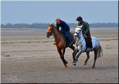 A Stroll on The Beach (Box Brownie Brian) Tags: horse horses gallop canter grey chestnut hooves beach sand theddlethorpe lincolnshire coast seaside run runing animal animals riders jockey helmet speed fast bridle nostrils boxbrowniebrian nikon