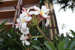 IMG_0232 (Psalm 19:1 Photography) Tags: hawaii oahu diamond head polynesian cultural center waikiki haleiwa laie waimea valley falls