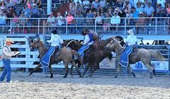 P3110264 (David W. Burrows) Tags: cowboys cowgirls horses cattle bullriding saddlebronc cowboy boots ranch florida ranching children girls boys hats clown bullfighters bullfighting