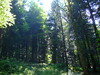 DSCF0816 (JohnSeb) Tags: trees tree forest germany deutschland árboles bosque arbre schwarzwald baum forêt badenweiler johnseb bäumen eurotour2012