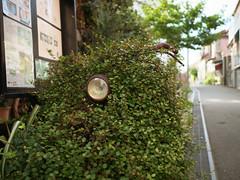 Headlight in the green (tetsuo5) Tags: enoshima fujisawa 江ノ島 藤沢市 explored dmcgm5 dgsummilux15mmf17
