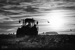 Contrasts (ibri.co.uk) Tags: tractor field birds stirling gulls farming tuesday ploughed stirlingcastle ploughing lenstagger cambuskenneth ladysneukroad