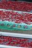 Calabria (Morena •AN• Massacesi) Tags: peperoncini calabria rizzuto
