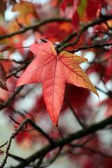 Autumn Leaves (DaveWilcock) Tags: park autumn leaves preston moor 108 aseason 115picturesin2015