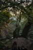 DSC_4579 (Πέτρος Τριανταφύλλης) Tags: nature forest team nikon smoke guys smoking exotic cigarettes junkies d7100