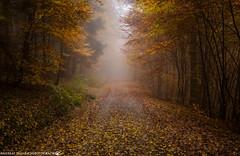 On a misty Day in November 2. (andreasheinrich) Tags: november autumn trees cold misty fog forest germany deutschland moody nebel path herbst kalt wald bäume weg badenwürttemberg düster neckarsulm neblig nikond7000