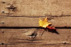 two-sday (s@ssyl@ssy) Tags: wood autumn shadow sun fall leaf maple sunny doorstep