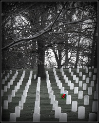 Solemn Reminder (Kindred Souls) Tags: christmas blue winter red coastguard white tree grave grass arlington forest germany soldier army blood tears european pacific flag homelandsecurity hill wwi wwii tomb navy americanflag atlantic sweat marker marines arlingtonnationalcemetery sailor airforce godblessamerica christmaseve gulfwar normandy mlk iwojima christmasday paver koreanwar tomboftheunknownsoldier allies specialforces vietnamwar nationalanthem airmen iraqifreedom waronterrorism flagoffreedom allmenarecreatedequal europeanallies