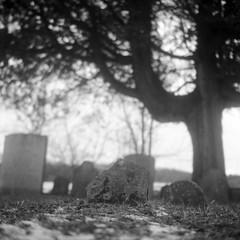 Pioneer cemetery, Kitchener, Ontario (Richard Wintle) Tags: voigtländer brillant v6 tlr twinlensreflex film 6x6 120 mf mediumformat ilford fp4 blackandwhite bw monochrome square squareformat skopar 75cm f45 adox fx39