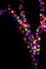 Bokeh Tree (JebbiePix) Tags: bokeh meyeroptik domiplan colors bubbles tree
