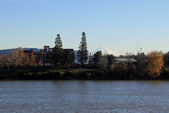 Mount Hood in the Distance (JB by the Sea) Tags: portland oregon multnomahcounty december2016 tommccallwaterfrontpark willametteriver mounthood mthood