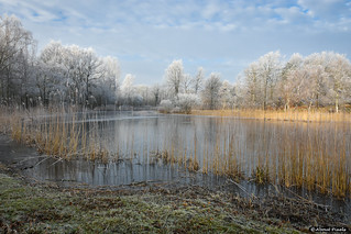 2017-01 Ruige rijp betoverd de natuur rond de Tenellaplas - Rockanje/NL