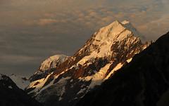 Evening at Mount Cook. NZ (Bernard Spragg) Tags: aorakimtcook newzealand lumixfz1000 scenery nature alps snow alpine cook geotagged