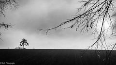 20161231Brouillard-2 (loflol) Tags: coteaux brouillard brume ancien grain