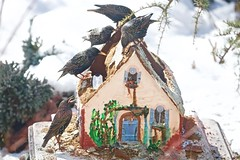The demolition crew! (ineedathis, Everyday I get up, it's a great day!) Tags: europeanstarling birds avian gingerbreadhouse storybookhome garden 2016gingerbreadhouse window roof royalicing christmas snow miniature sugarwork modeling baking nikond750 fairytalecottage weepingatlascedar tree ornamentaltree outdoor gumpaste