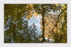 - DSC_1022 c. (Ferruccio Jochler) Tags: reflect water vegetation nature