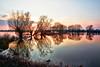 Muchelney Sunset (bhp1956) Tags: trees muchelney landscape sunset winter reflection water muchelneyfloods somersetlevels somerset evening riverparrett flood