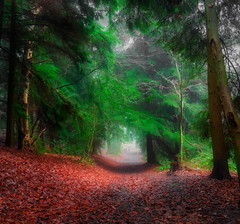 Red and Green (jamietaylor2127) Tags: wood park red green ngc nature trees leaves foliage scenic pathway