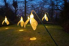 Osterglocken (Sascha Ho) Tags: osterglocken abend dämmerung blumen sony slta58 gruga outdoor essen nrw light