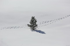 OKIMG_4820 (taymtaym) Tags: winter inverno neve snow ice ghiaccio pianidipezza piani di pezza laquila abruzzo abruzzi italy italia albero cristallo tree trees alberi crystal frozen orme footsteps orma footstep cold freddo bianco white christmas natale