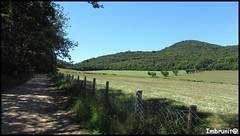 sentiero toscano (imma.brunetti) Tags: sentiero prato campo incolto staccionata alberi verde maremma toscana scarlino grosseto piandalma stradaprovincialecolicchie rete gregge colline erba
