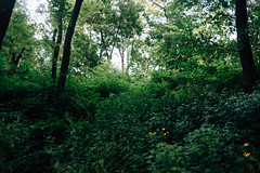Nature (JoelZimmer) Tags: newyork unitedstates centralpark manhattan midtown 35mmf2d nikond750 discovercentralpark