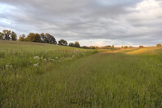 Field of dreams?