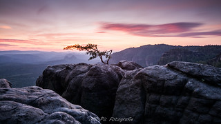 lonley pine